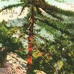 Trail up Mt. Wilson