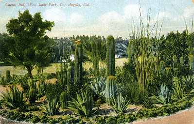 Cactus Bed in West Lake Park