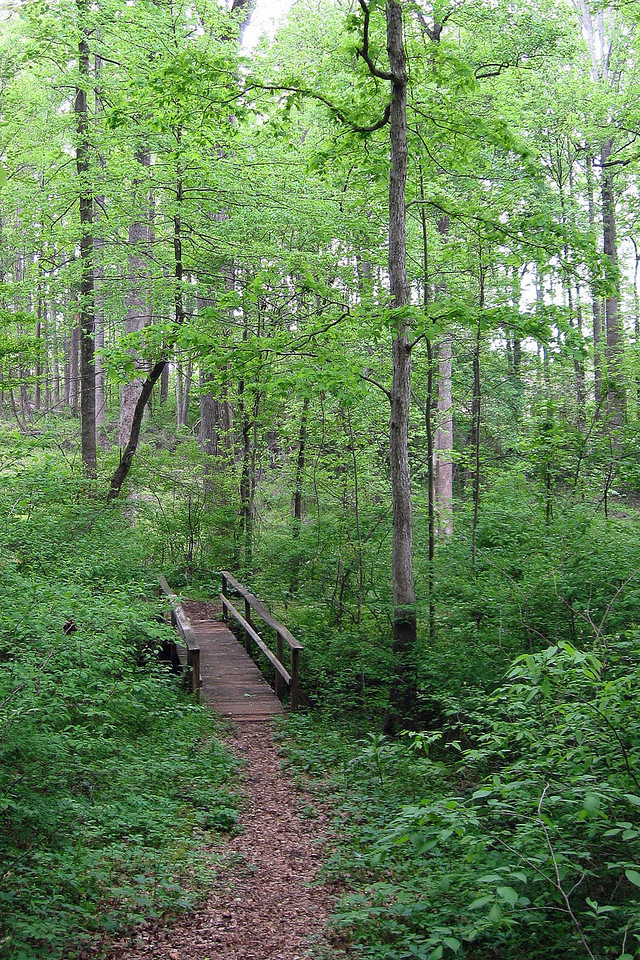 Though short and un-wilderness-y, this trail was extremely relaxing and enjoyable...