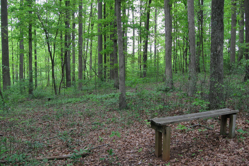 A number of these simple benches were scattered through the woods, just off the trail, inviting you to just relax and enjoy the sounds of the forest...