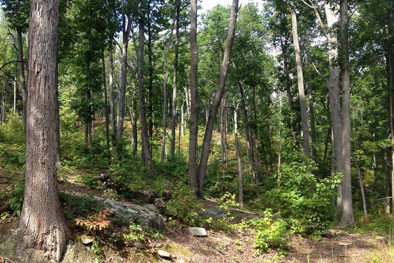 Battlefield Trail - Winston's Attack