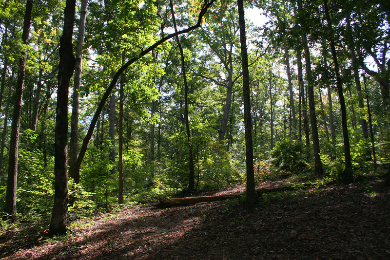 Battlefield Trail - Shelby's Attack