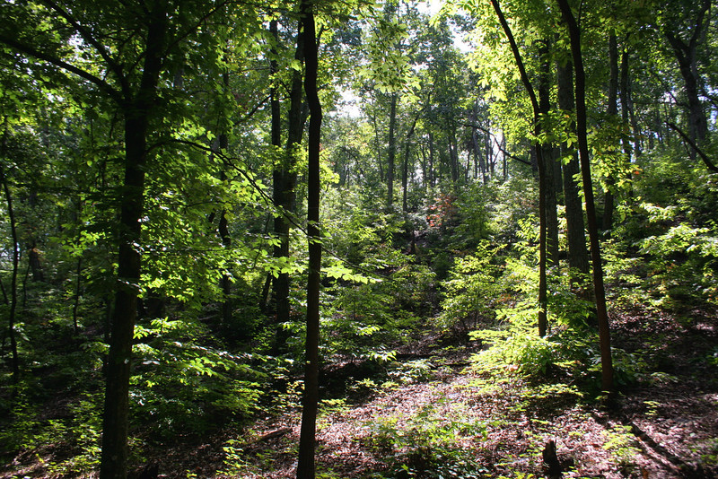 Battlefield Trail - Cleveland's Attack