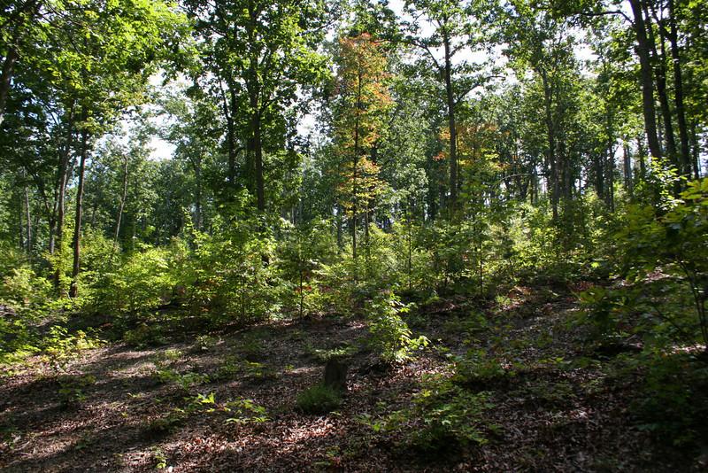 Battlefield Trail - Sevier's Attack
