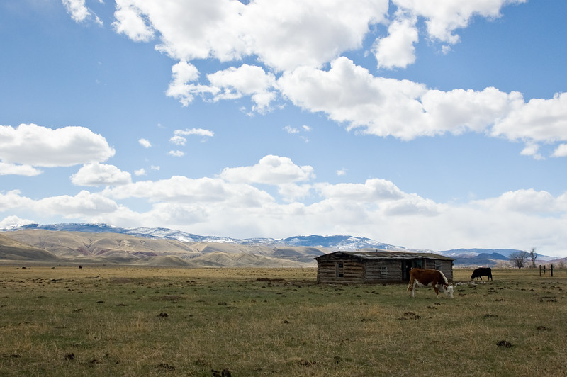 Grazing by the Shack-0749