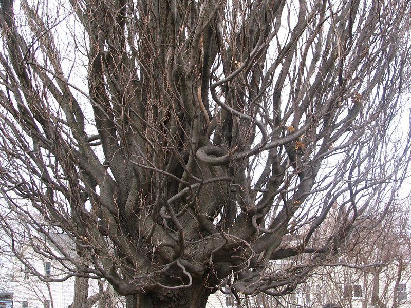 cool tree in Howard Cemetary