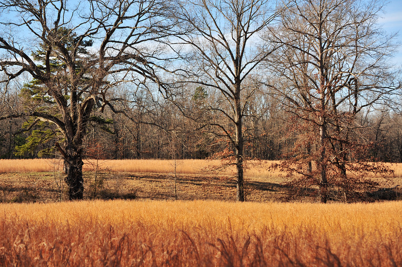It was at this spot where the battle of Shiloh began on April 6, 1862.