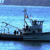 Predator,Borghild,Built 1919 Sagstad Seattle,Alfred Aakervik,Pic Taken 2013 Puget Sound,