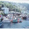 Beaver_Cove_Viking_Wind_Icicle_Seafoods