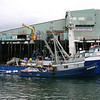 Kimber_Nordic_Mariner_Petersburg_Icicle_Seafoods