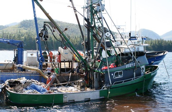 Aleutian Dream,Built 1975,Darrell Kapp Alan Kapp  Robert Nielsen,Yancey Nielsen,Plugged,Northern Mariner Northern Cascade Built 1974 Marco  Owners Cascade Boat Co  American Beauty  C M Fisheries