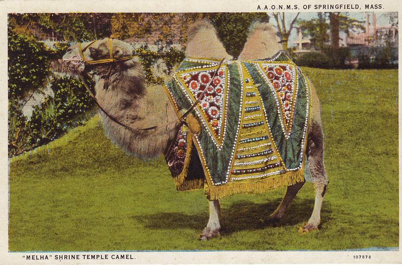 Springfield Shrine Temple Camel