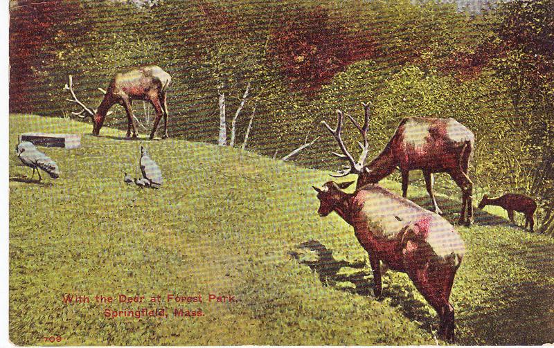 Forest Park Herd Deer