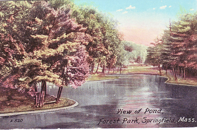 Forest Park View of Pond