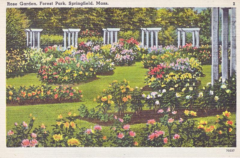 Forest Park Rose Garden 3