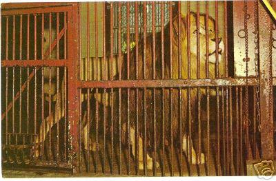 Forest Park Springfield Lion