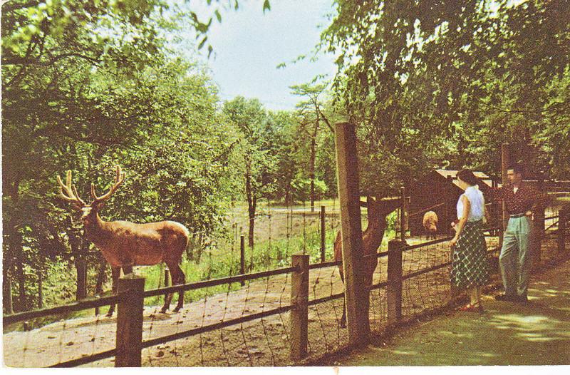 Forest Park Feeding animals