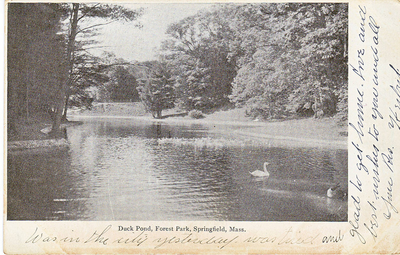Forest Park Duck Pond 3