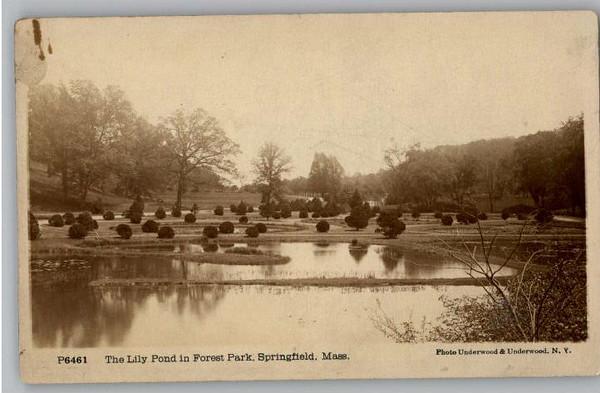 Springfield Lily Pond F P