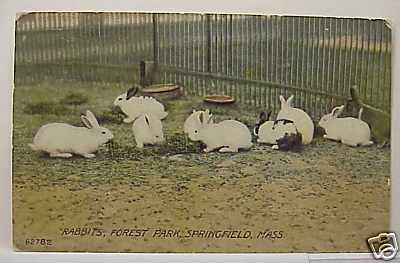 Springfield Rabbits in color