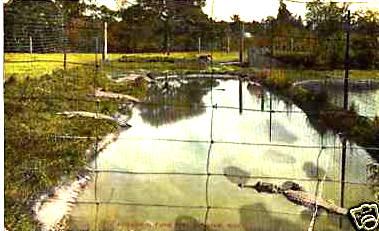 Springfield FP Alligators