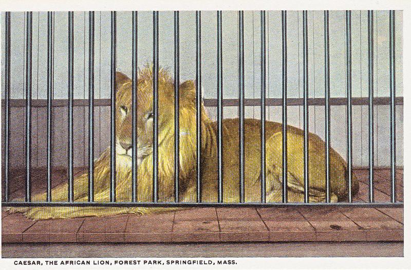 Forest Park Lion2