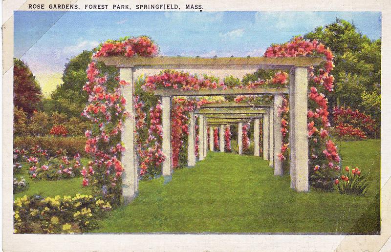 Forest Park Rose Garden 4