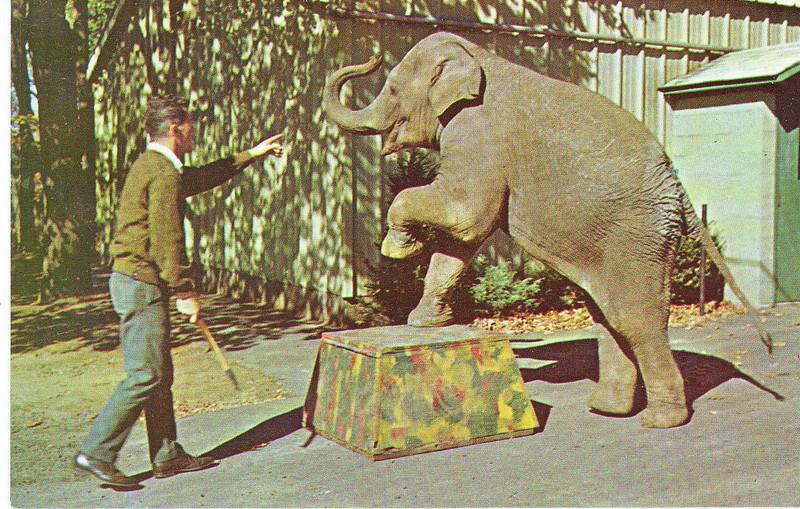 Forest Park elephant 1