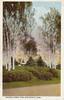 Forest Park Birches 15-30 1
