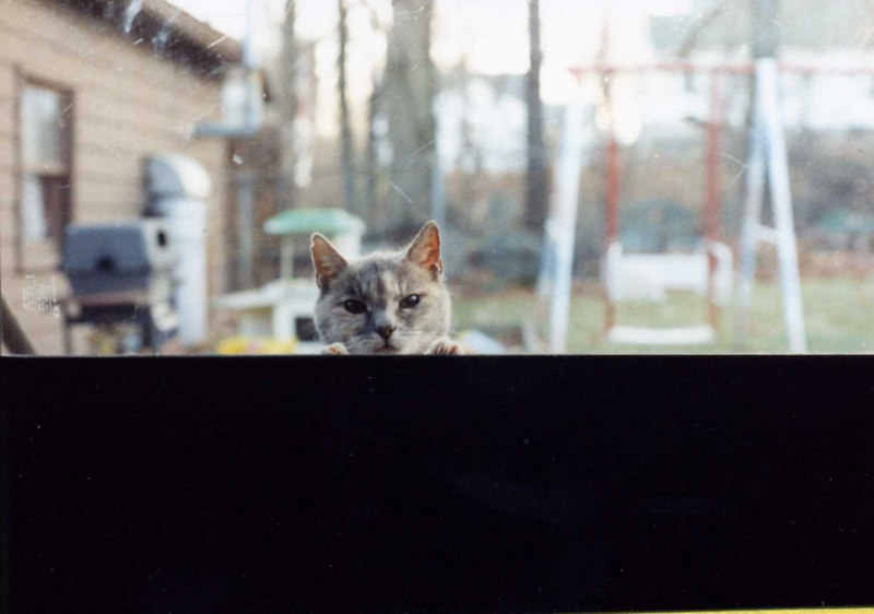 Kitty at the back screen door.