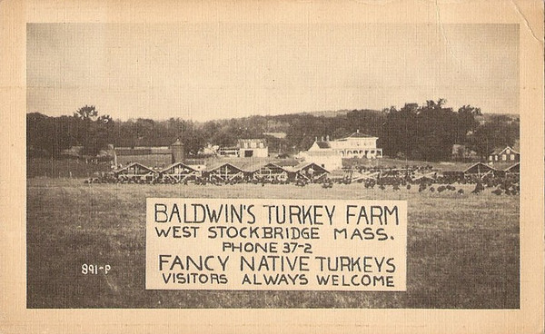 West Stockbridge Baldwin's Turkey Farm