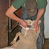 Shear Mania July 09 001