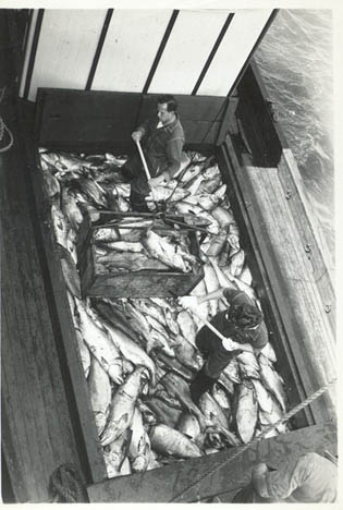 1946_ST_Helens_Columbia_River_Salmon