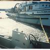 Bainbridge_herring