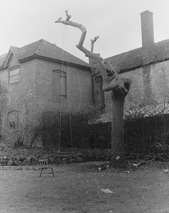 In the early 60's we demolished a huge weeping ash tree for fears of it collapsing due to some rot in the trunk