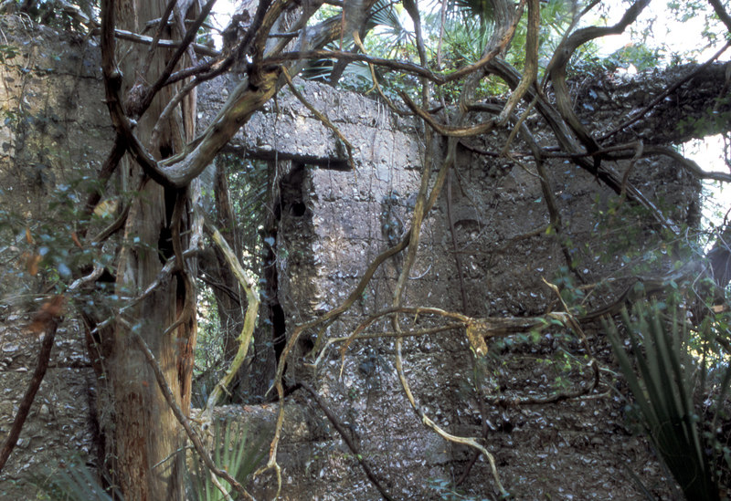37 Distillery and Secondary Building or Sugar Mill ruins in the Thicket in McIntosh County, Georgia