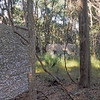 02 Tabby slave house ruin in the Thicket in McIntosh County, Georgia