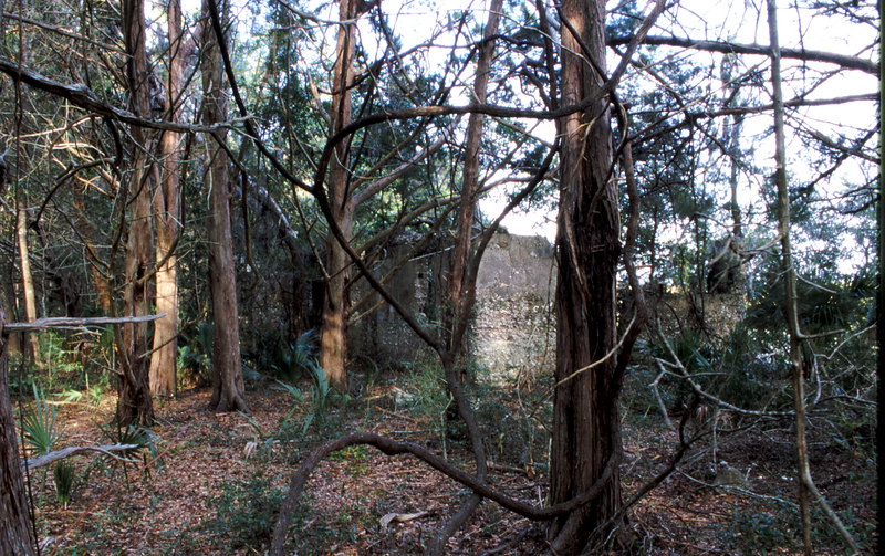 49 Distillery and Secondary Building or Sugar Mill ruins in the Thicket in McIntosh County, Georgia