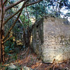 39 Distillery and Secondary Building or Sugar Mill ruins in the Thicket in McIntosh County, Georgia