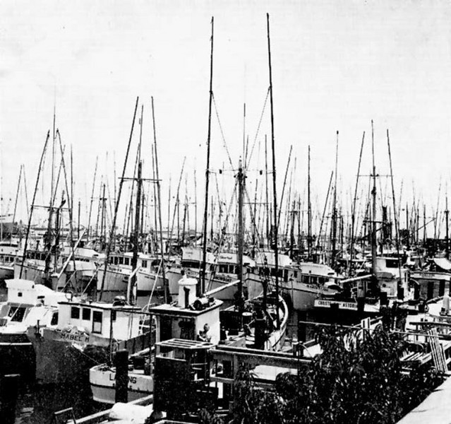 General_Petroleum_Terminal_Island_Mabel_M_lancing_Solveig_Showboat_Kay_D_Christe_II