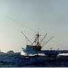 Alliance_Built_1981_Friday_Harbor_Ron_Warren_Robert_Spelbrink_Mike_Zucker