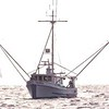Tarka Wilma S  Judy J  Built 1964 Friday Harbor  Stanley Strum  Charlie Johnson  Mark Dinwidde  Glen Mielke