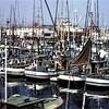 San Diego 1959 Northern Albacore  Tuna Jig Fleet  Beticia Karen Y  Alf  Destiny