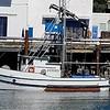 Sea Lion III Built 1943 Kernville Oregon  Builder E M Gerttula All Owners  A O Barger  John Bolle  Kaino Niemi  Paul Stannard  Darrell Harper Pic Taken 2017