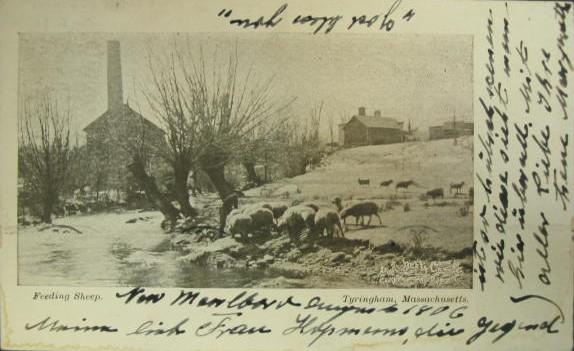 Tyringham Feeding Sheep