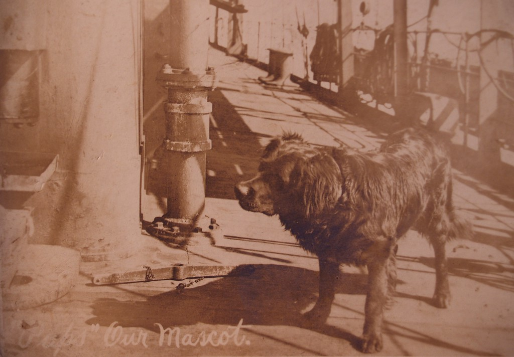 "USS Jason (Collier # 12, later AC-12 and AV-2), 1913-1936  <br /> Original Title: ""Pups"" Our Mascot.<br /> Original Notes On the Back of Picture:  Just a photo of Pups our Mascot. She's a NewFoundland dog and a good one. She never gets sea sick. Can stand the rough seas as good as any of the sailors."