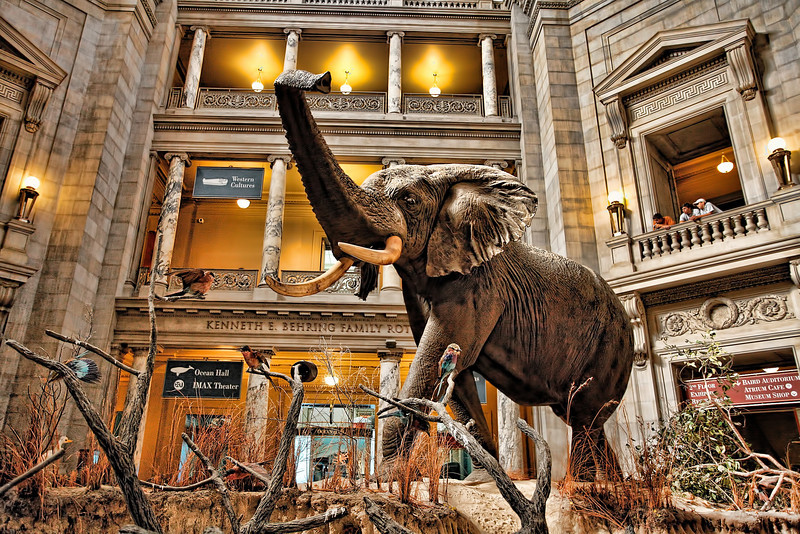 Natural History Museum - Smithsonian Institution