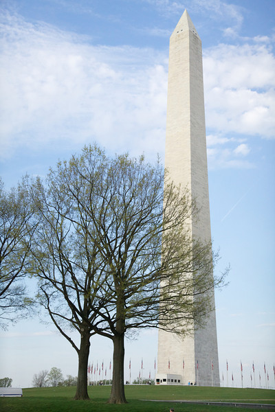Washington Monument Embraced by Nature