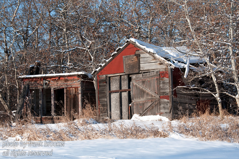 A couple of old sheds overgrown by bush