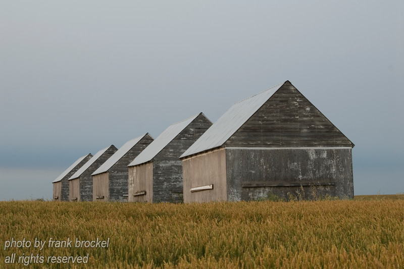 5 old Graineries in a Field near Beiseker, Alberta
